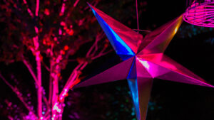 starlight (7)